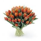Tulpen oranje