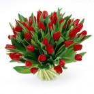 Tulpen rood